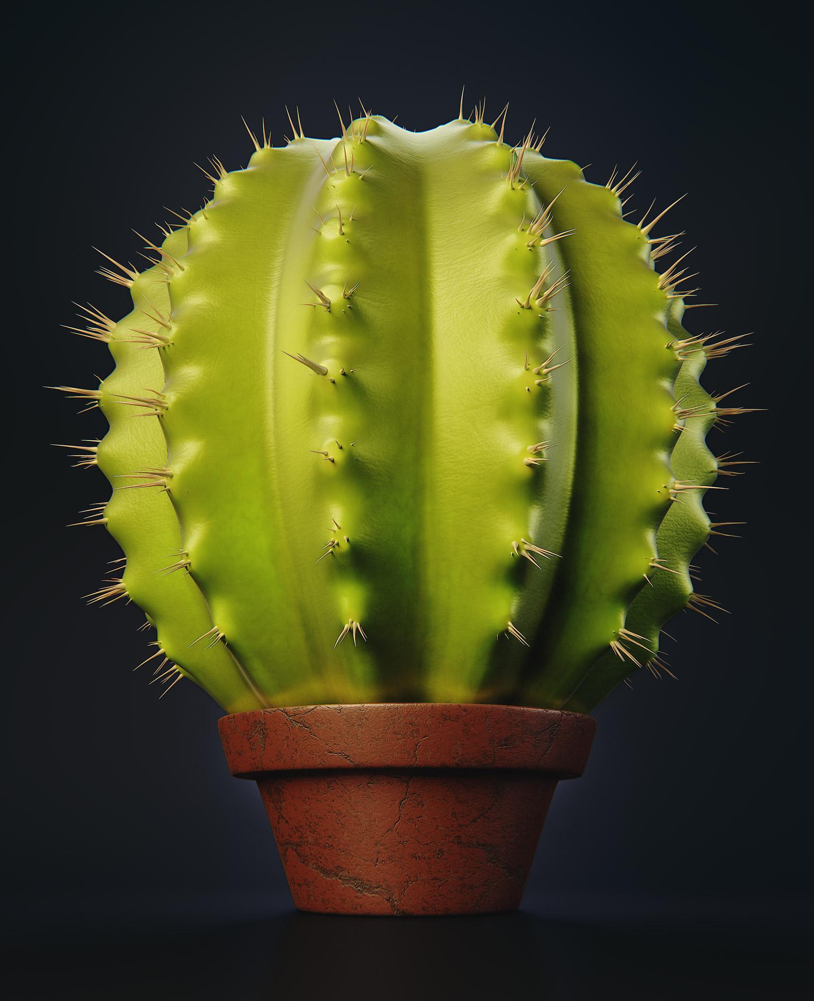 Cactus_01_w1600